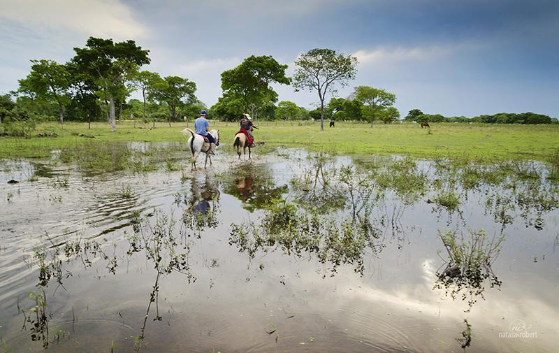 pantanal1 026