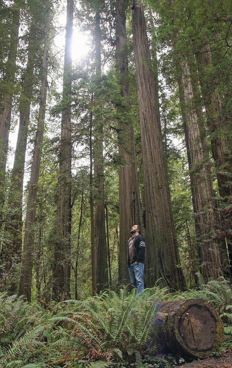 roadtrip_amerika_potovanja_redwoods_11