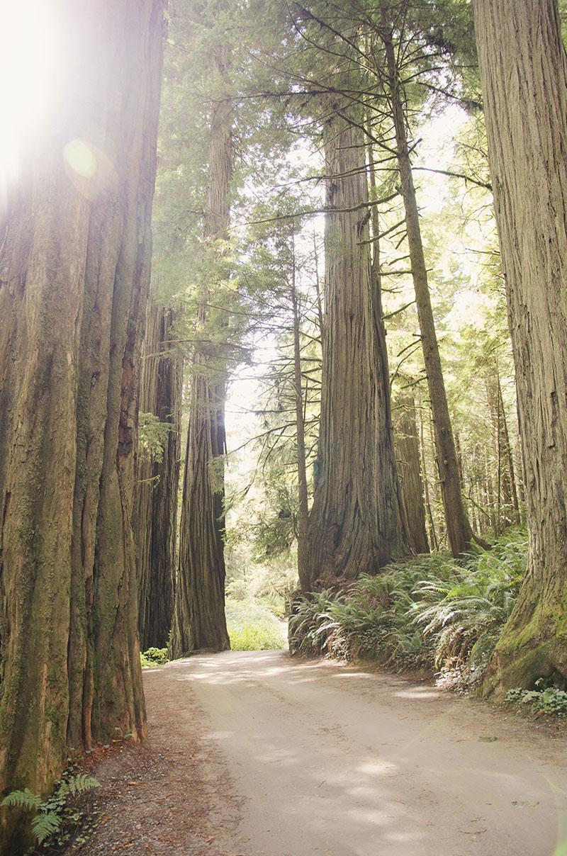 roadtrip_amerika_potovanja_redwoods_19