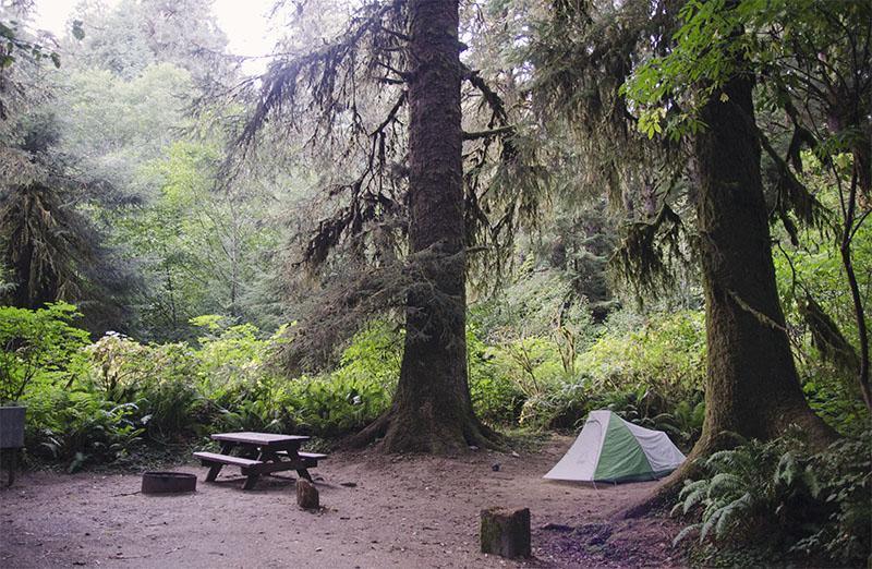 roadtrip_amerika_potovanja_redwoods_2