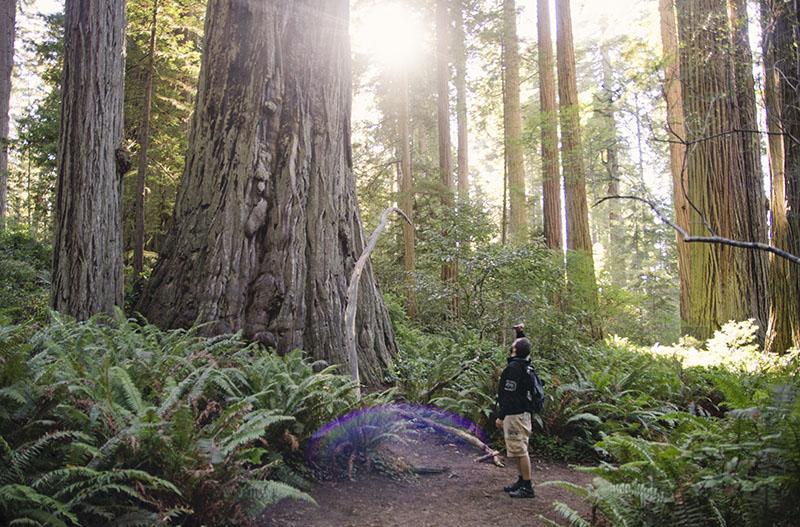 roadtrip_amerika_potovanja_redwoods_21