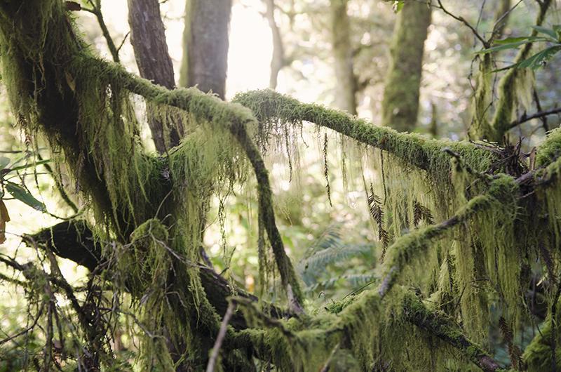 roadtrip_amerika_potovanja_redwoods_7