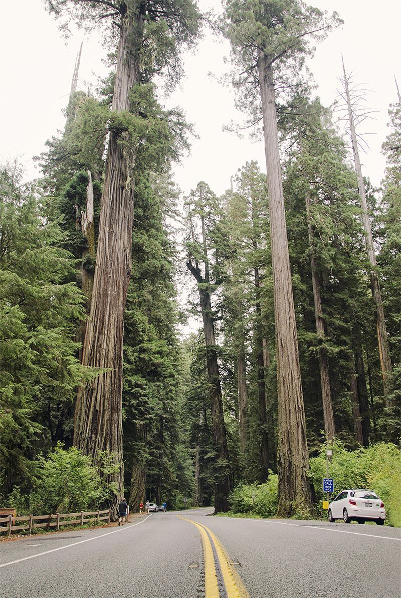 roadtrip_amerika_potovanja_redwoods_8